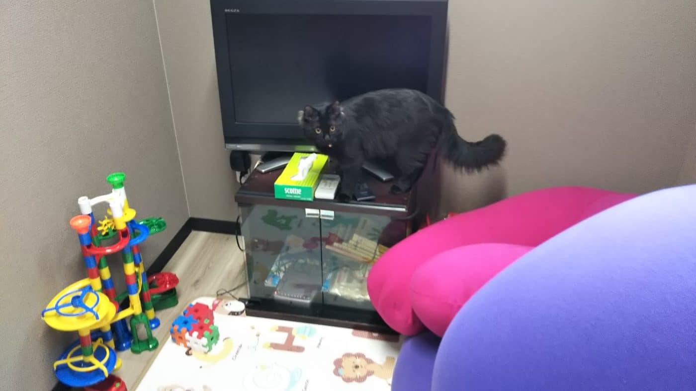 水走本社の託児所と猫