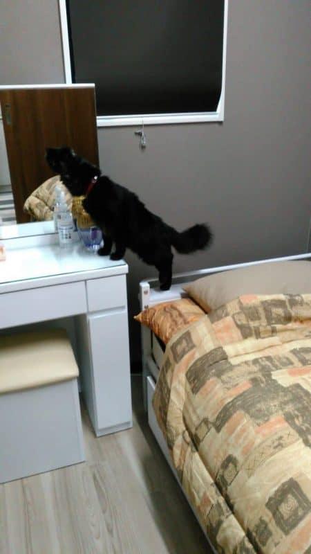 ここはどこ おはぎ 黒猫