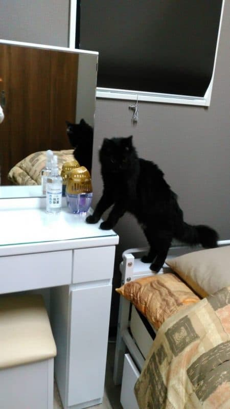 散策おはぎ 黒猫