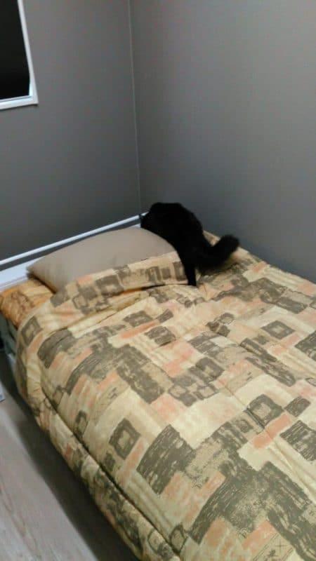 散策中おはぎ 黒猫